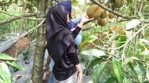 Kebun Durian Asyik di Garut, Wajib ke Sini!