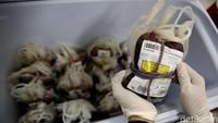 Stok Darah PMI Hanya Cukup untuk 2 Hari, Golongan Darah A dan AB Menipis