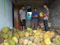 Legit Pahit Durian Deprok Khas Salaman Magelang yang Berdaging Tebal