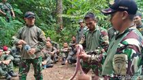 Menengok Prajurit TNI Bertahan di Alam Liar, Ular Pun Jadi Santapan