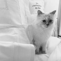 Kucing Ini akan Ikut Warisi Kekayaan Karl Lagerfeld yang Mencapai Rp 2,8 T