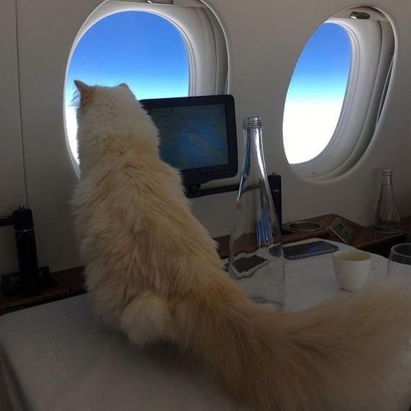 Sering bepergian dengan Karl, tentunya Choupette tak pernah naik pesawat komersial. Sebuah pesawat jet pribadi selalu menantinya ketika ingin bepergian (choupettesdiary/Instagram)