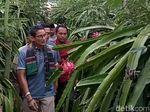 Di Depan Petani, Sandiaga Singgung Kebijakan Buah Impor