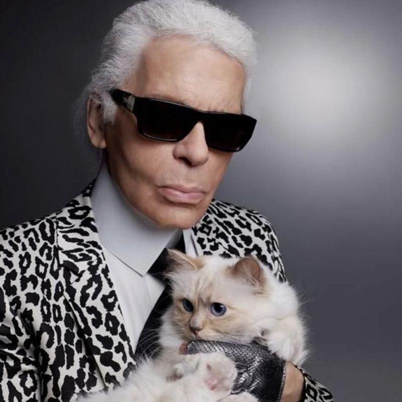 Desainer Karl Lagerfeld wafat meninggalkan uang miliaran rupiah untuk kucingnya, Choupette. Disebut kucing terkaya, liburannya lebih mewah dari selebgram (choupettesdiary/Instagram)