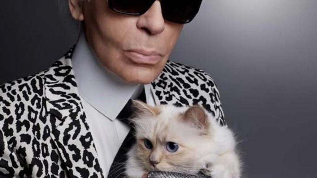 Foto: Liburan Jetset Kucing Mendiang Karl Lagerfeld