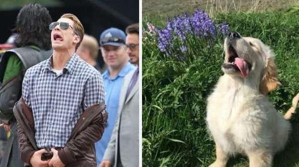 Kocak! Saat Anjing Peliharaan Tirukan Pose Chris Evans