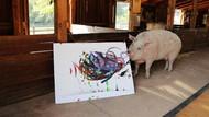 Ini Pigcasso, Babi dari Afrika Selatan yang Mahir Melukis