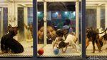 Di Jakarta Ada Pameran Hewan Peliharaan Terbesar di Asia Tenggara Lho