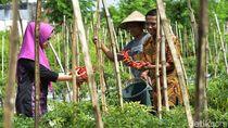 Membangun Pertanian Kota