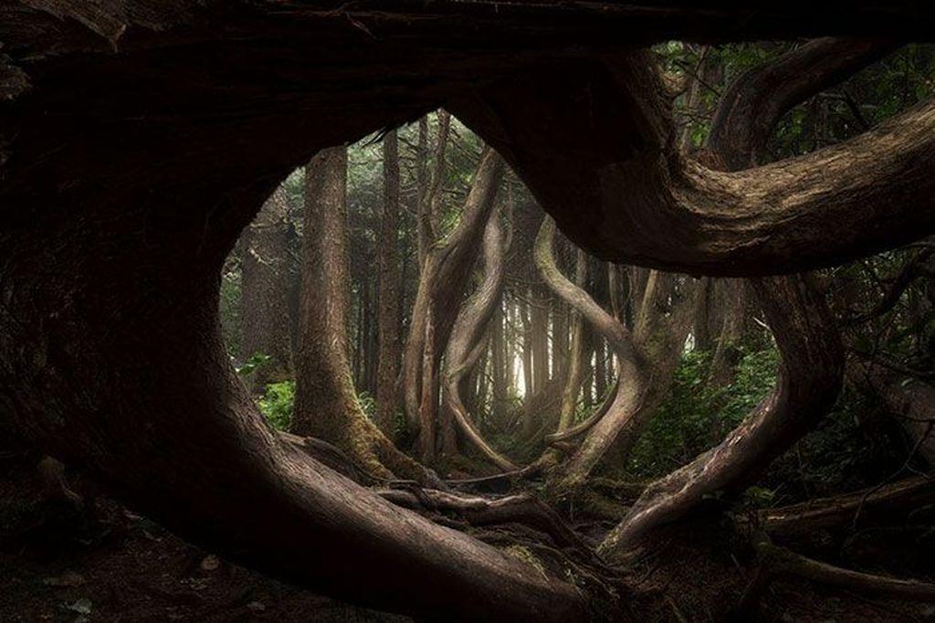 Juara pertama diraih Adam Gibbs menampilkan Botanical Bay. Foto: internationallandscapephotographer.com
