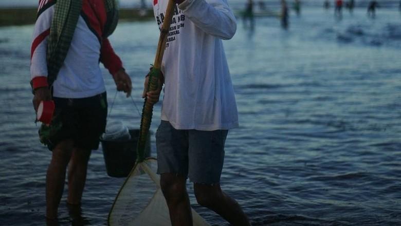 nyale, cacaing laut khas lombok