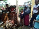 Warga Sukabumi Tangkap Ular Piton 5 Meter Saat Memangsa Ayam
