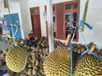 Ini Keistimewaan Durian Serendet Khas Kampung Benteng Ciamis yang Jadi Buruan