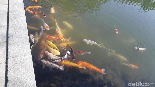 Wisatawan boleh memberi makan ikan di kolam ini. Tapi makanan ikannya harus beli di loket ya seharga JPY 100 atau sekitar Rp 13.000. (Bonauli/detikTravel)