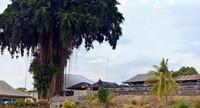Desa Bengkala berada di Kecamatan Kubutambahan, Kabupaten Buleleng, Bali, Indonesia yang dikenal memiliki puluhan warga bisu-tuli atau dikenal sebagai Kolok (Mark Eveleigh/BBC Travel)