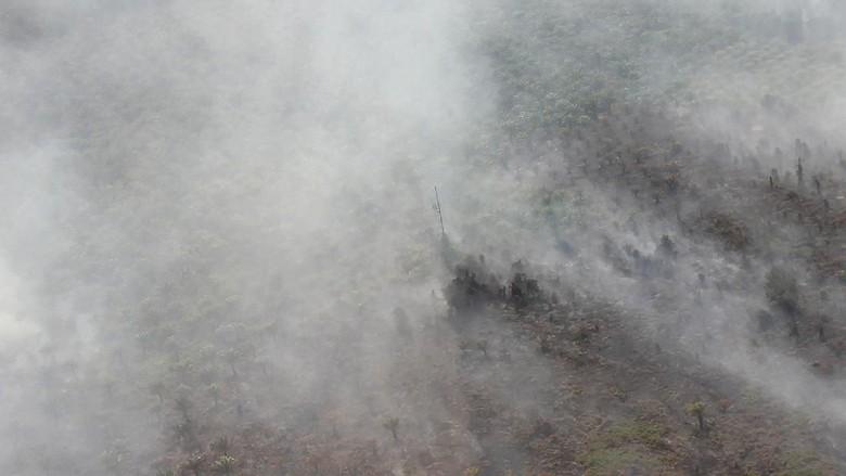 Cegah Kebakaran Hutan, Pemprov Sumsel Dkk Rapat Koordinasi Esok