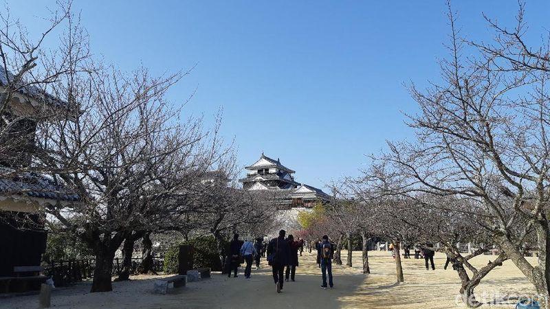 Kastil Mastsuyama menjadi ikon penting Kota Matsuyama. Ini satu dari 12 kastil selamat dari bencana alam besar di Jepang selama beberapa waktu. (Bonauli/detikTravel)