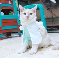 Bikin Baju untuk Kucing, Wanita Ini Raup Puluhan Juta Per Bulan