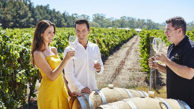 Swan Valley Perkebunan anggur di Swan Valley (Tourism Western Australia)