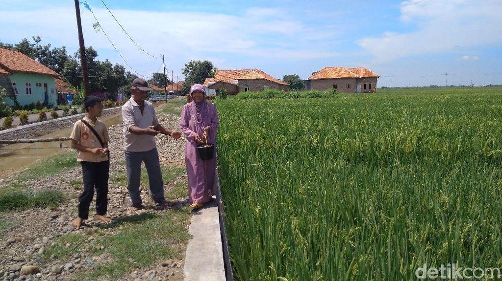 Jelang Panen, Masyarakat Cirebon Arak Tombak Keliling Desa