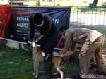 Rabies Masih Hantui Warga Dompu NTB, Ibu Hamil 7 Bulan Digigit Anjing