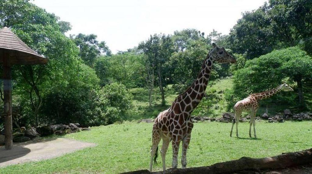 Akhir Pekan Ini Asyiknya Ajak Anak ke Taman Safari