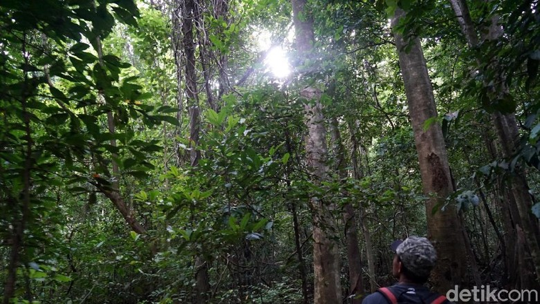 Ilustrasi hutan (Wahyu Setyo/detikcom)
