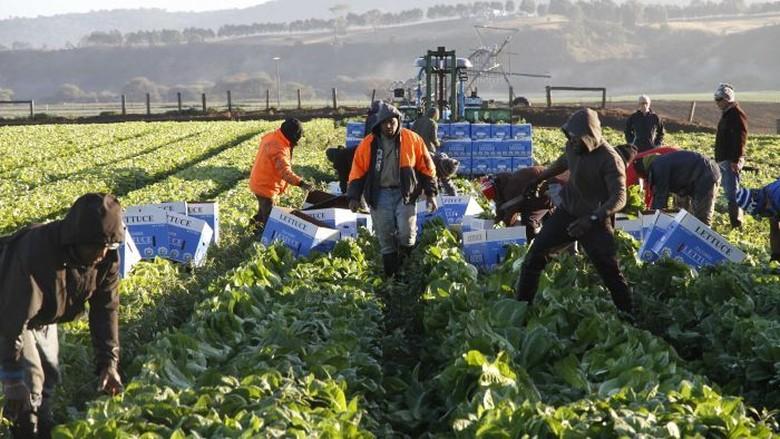 Pekerja Indonesia di Australia Sambut Baik Penambahan Kuota WHV