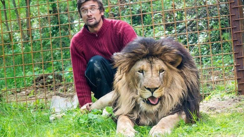 Tragis! Pria Ceko Tewas Diterkam Singa Peliharaannya di Rumah