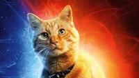 4 Kucing Perankan Goose, Kucing yang Curi Perhatian di Captain Marvel