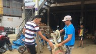 Lagi, Ular Piton Seberat 20 Kilogram Ditangkap di Sulbar