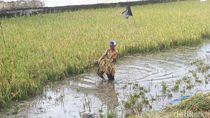Luapan Sungai Bengawan Solo Rendam 45 Desa di Bojonegoro