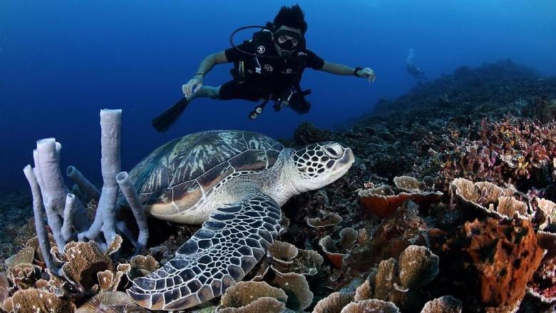 My Trip My Adventure diving bareng penyu di Lombok (My Trip My Adventure)