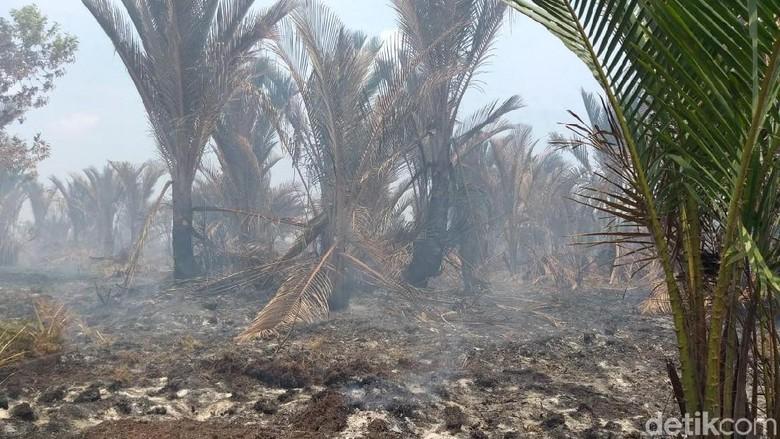 Kebakaran Lahan di Meranti Riau, Jarak Pandang Masih Normal
