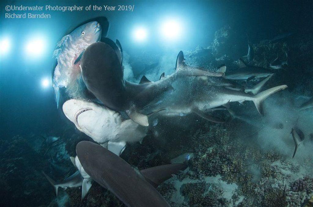 British Underwater Photographer of The Year 2019 diraih Richard Barnden - Inggris. Foto: Underwater Photographer of The Year