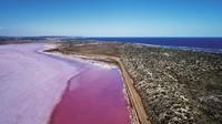 Danau Hut Lagoon adalah danau ajaib yang dijuluki Pink Lake dan memiliki air asin. Hutt Lagoon memiliki laguna berair merah muda atau pink (Tourism Western Australia)