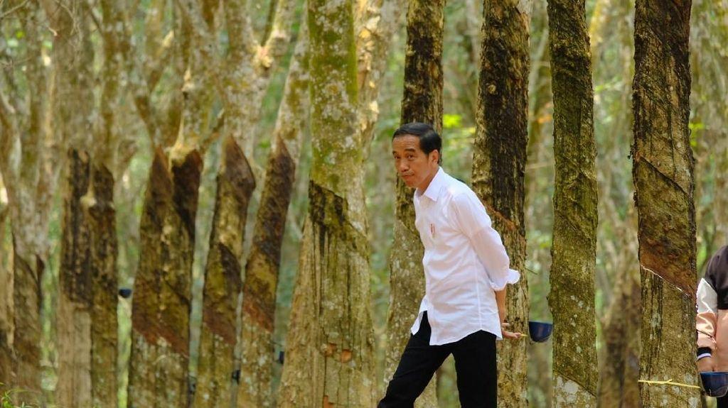 Jokowi ke Petani: Kalau Harga Anjlok yang Dimarahi Saya