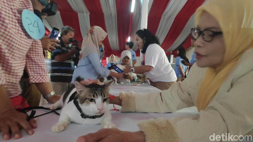 Video: Saat Para Kucing Berlomba Mirip Bobby The Cat Prabowo