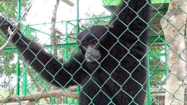 Wisatawan juga bisa melihat hewan langka yang dilakukan penangkaran. Ada juga fasilitas tempat istirahat dan tempat ibadah. (Deni Wahyono/detikTravel)