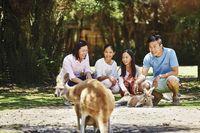 Kanguru di Caversham Wildlife Park (Tourism Western Australia)