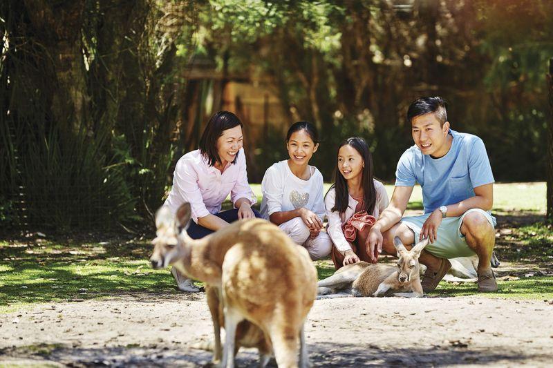 Hewan paling khas dari Australia adalah Kanguru. Di Australia Barat, turis bisa menjumpainya di Caversham Wildlife Park di luar Kota Perth (Tourism Western Australia)