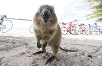410 Gambar Hewan Australia Gratis Terbaru