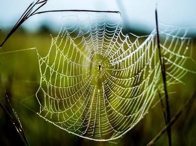 Foto: Keajaiban Bukit Jaring Laba-laba di Tambrauw
