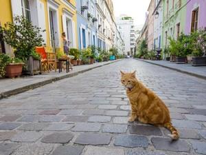 Terlalu Ramai karena Dipakai Foto-foto, Jalanan di Paris Ini Terancam Ditutup