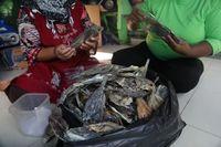 Usaha Bandeng Cabut Duri, Warga Pulau Seribu Untung Rp 20 Juta/Bulan