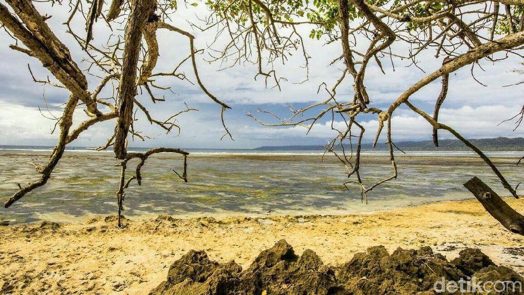 Alas Purwo, Hutan Tertua di Pulau Jawa yang Diselimuti Misteri