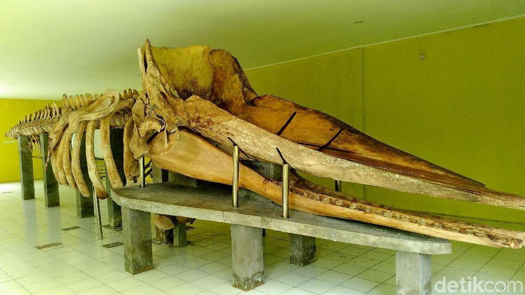 Terumbu Karang dan Kerangka Paus 13 Meter di Tidung Kecil