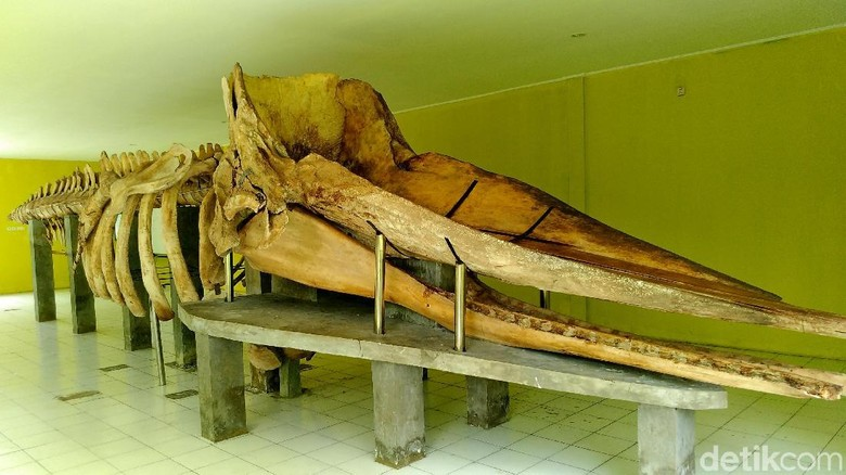 Kerangka paus sepanjang 13 meter di Pulau Tidung Kecil (Danu Damarjati/detikcom)