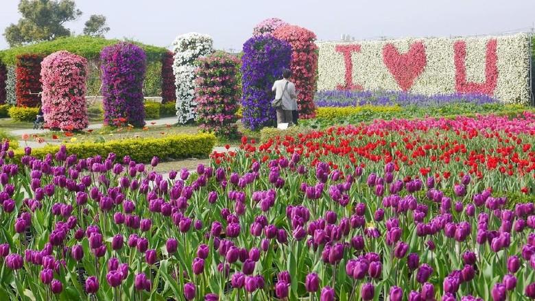 Bunga tulip di Chung She Flower Garden, Taichung (Kurnia/detikcom)