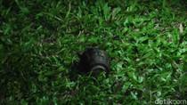 Tim Jibom Brimob Aceh Utara Amankan Granat Temuan Warga